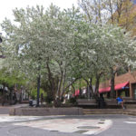 Flowering trees on Pedmall